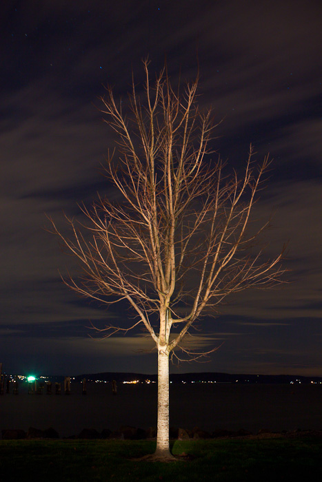 Light Painted Tree