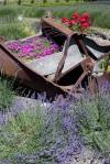 Jardin du Soleil LavenderFarm