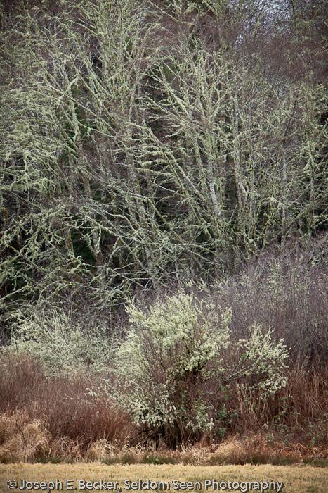 Johns River Trees