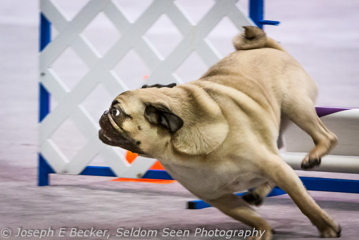 Pug Determination