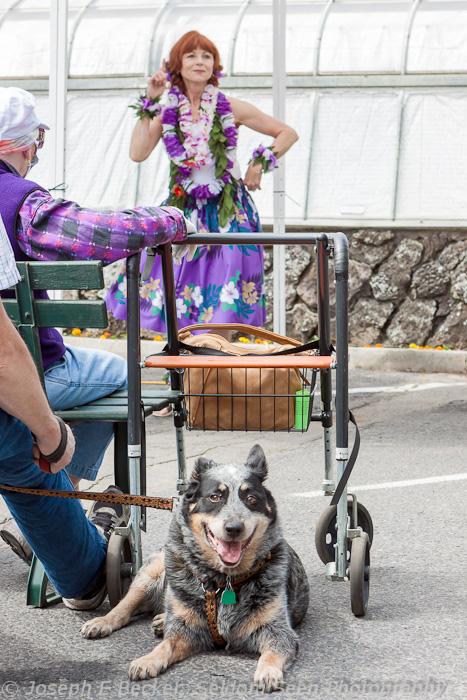Dancer and Dog