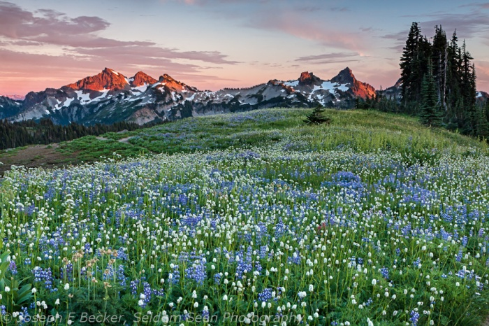 Tatoosh Range and Wildflowers