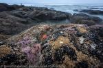 Beach 4 Starfish