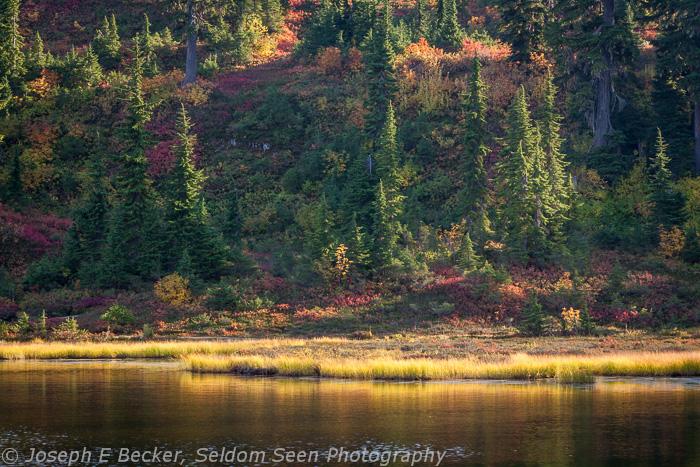 Picture Lake Shoreline