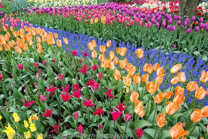 Display Garden