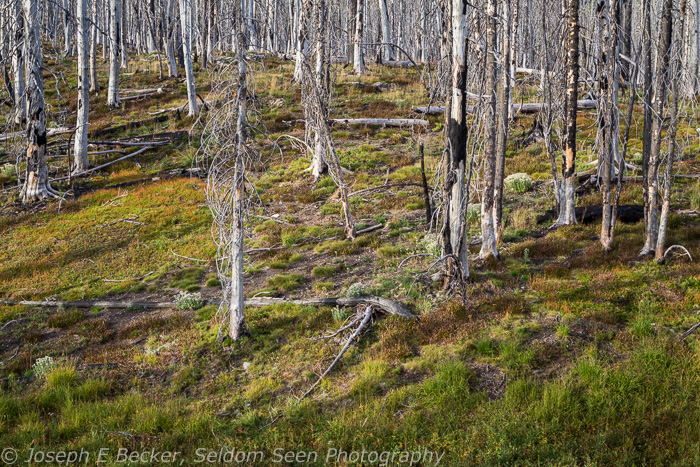 Silver Forest 2