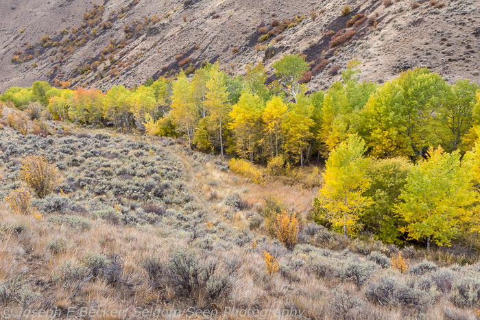 Black Canyon Aspens 1