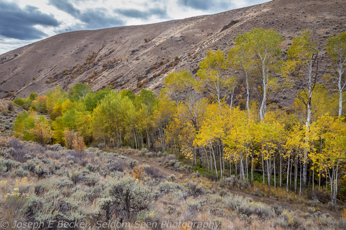 Black Canyon Aspens 3