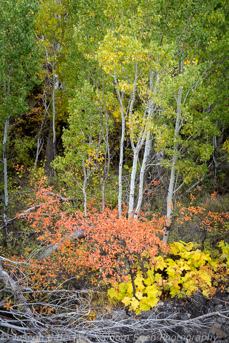 Color in Black Canyon