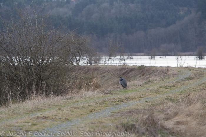 January - a bad bird shot