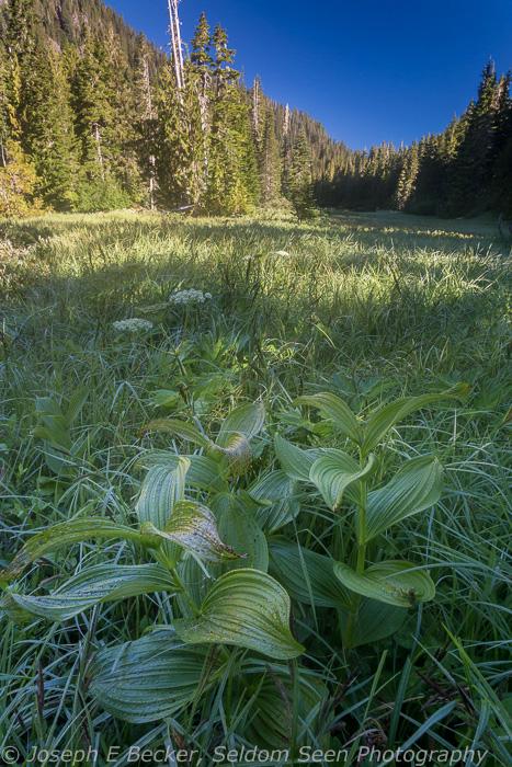 Meadow near Deer Lake