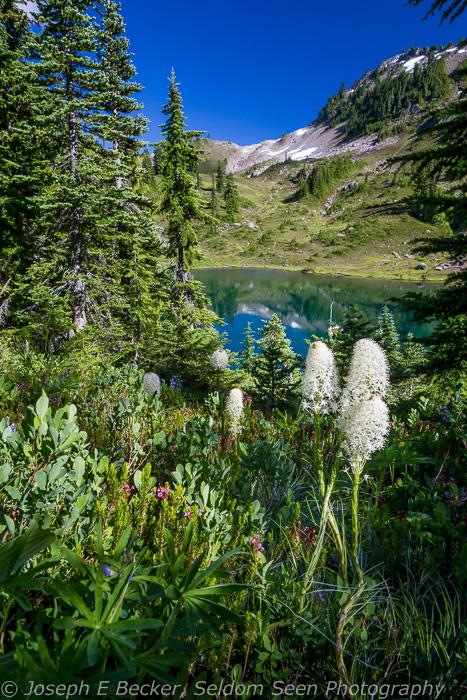Beargrass and Round Lake
