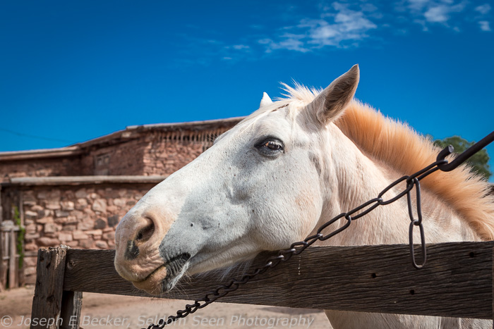 Hubbell Horse