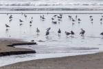 Gulls and Creek