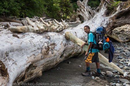 We found these whale bones that someone had arranged on a log. That big one near Izzy weighs at least 50 pounds.