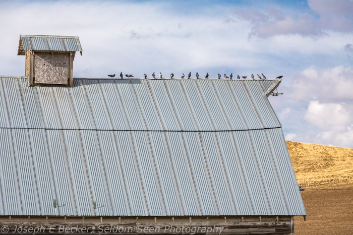 Birds and barn, somewhere west of the town of Steptoe