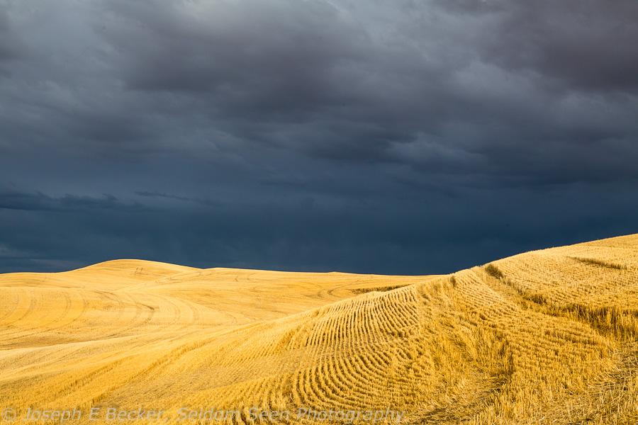 Birght Field, Dark Sky