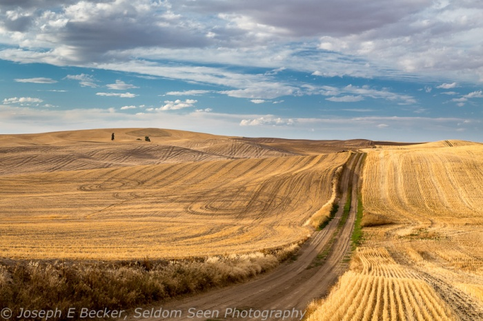 Shot from the same spot as the above image - a typical dirt road in the Palouse, shot on Friday and likely impassable on Saturday during the rain