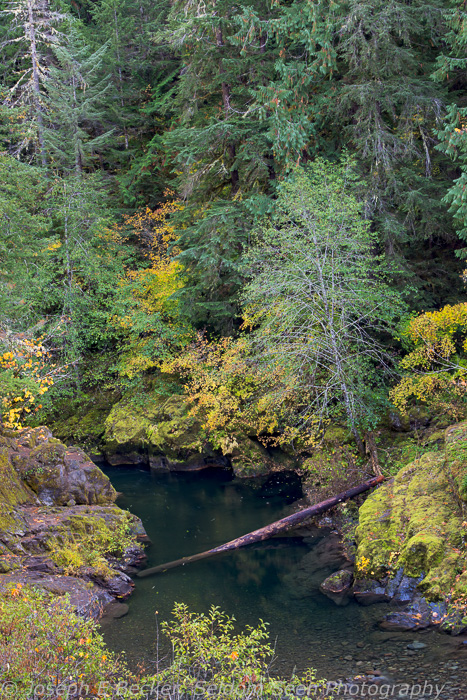 Color along the Breitenbush River - I was a bit early, that green tree leaning over the river is probably yellow by now.