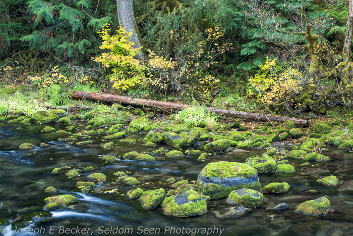 Along the upper Clackamas River (the featured image above is also on the Clackamas).