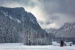 Winter Grove