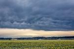 Dark Skys, YellowFields