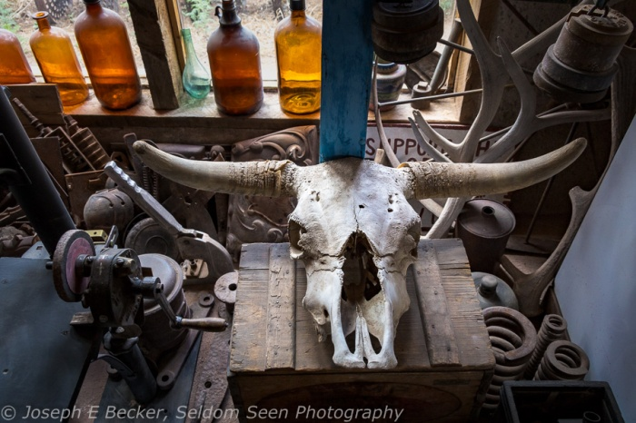 Cow skull and bottles inside the Mining Museum