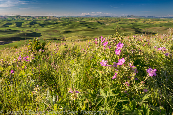 Wildflowers on Steptoe Butte