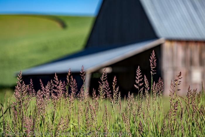 Grass near barn on Faught Road