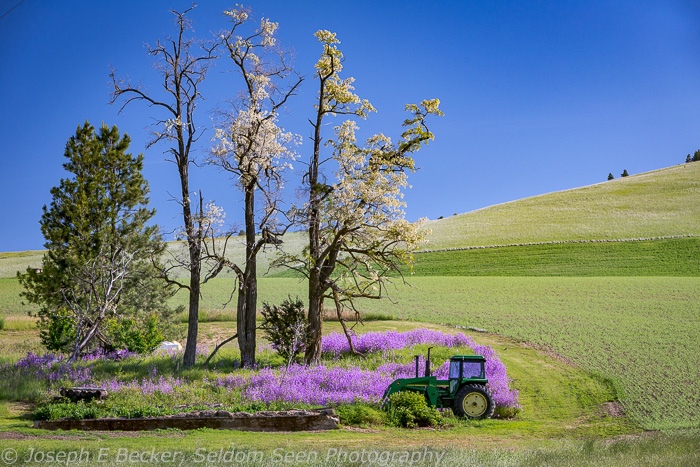 I found this tractor and flowers south of Farmington.