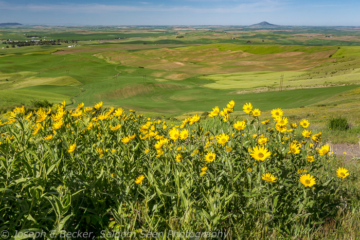 Here's another shot without good light, but I bet it looks great at sunrise. This viewpoint is is Idaho, northeast of Farmington. Steptoe Butte is in the distance.