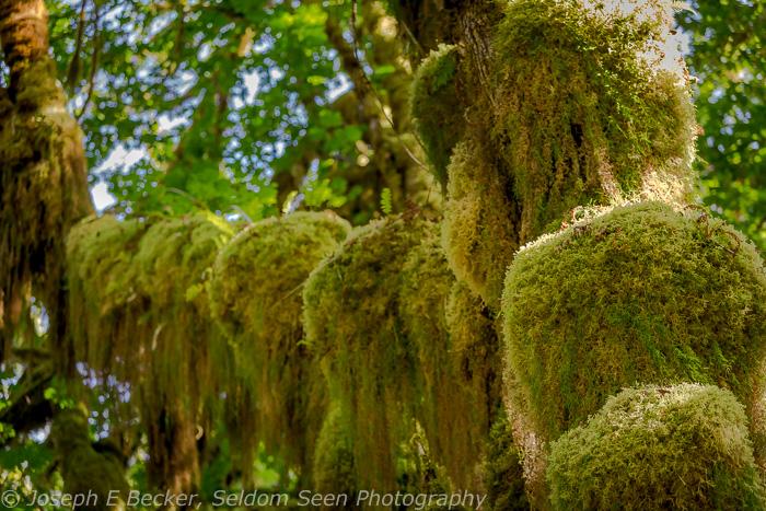 Moss Humps