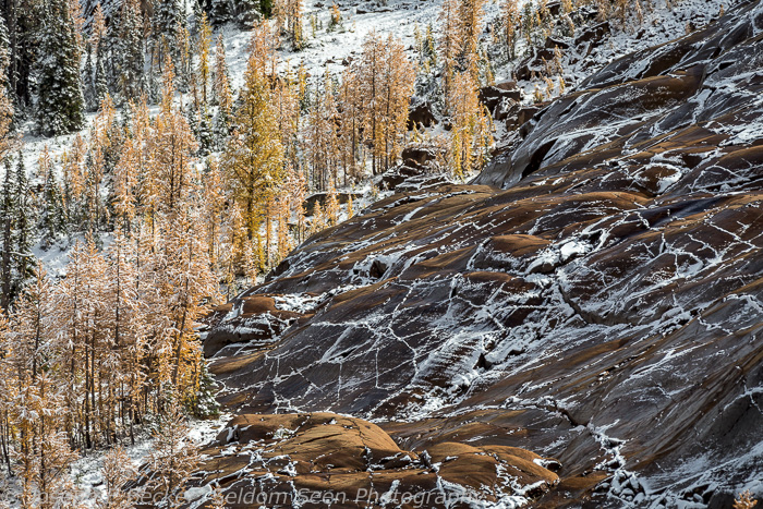 Rock slope and larch in Headlight Basin