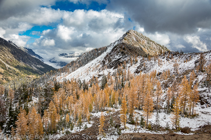 The larch grove near Ingalls Pass, Iron Peak in the background